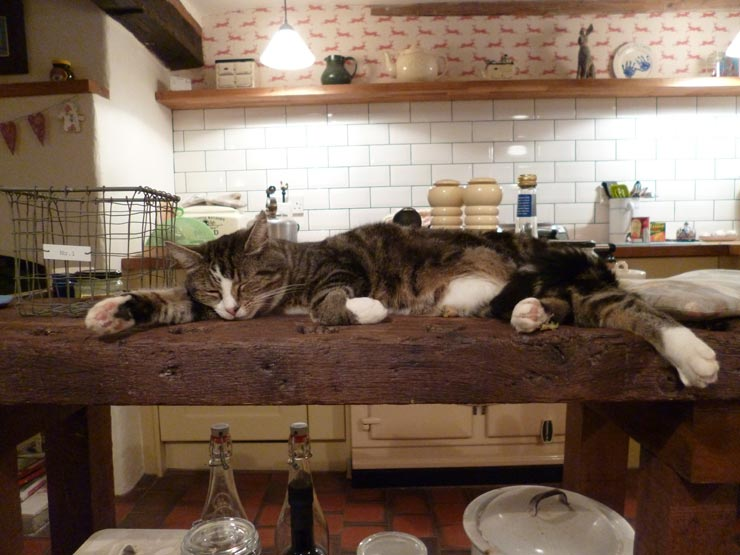 How to Keep Cats off Counters | How to Keep Cat off Table ...